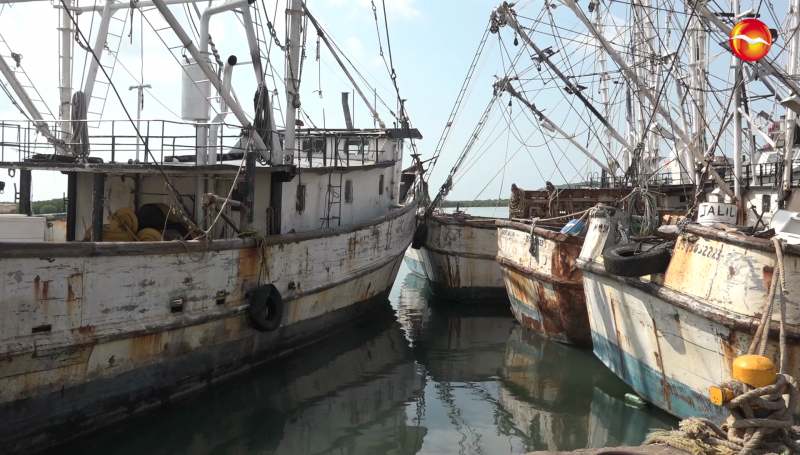 Con poco camarón llegan las primeras embarcaciones de la temporada a Mazatlán