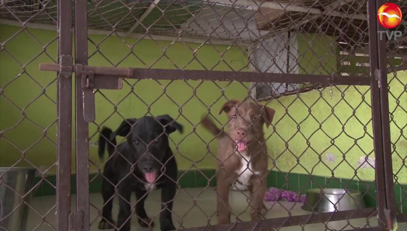 """Amigos de los Animales A.C., podría tener su """"Dog Park"""""""