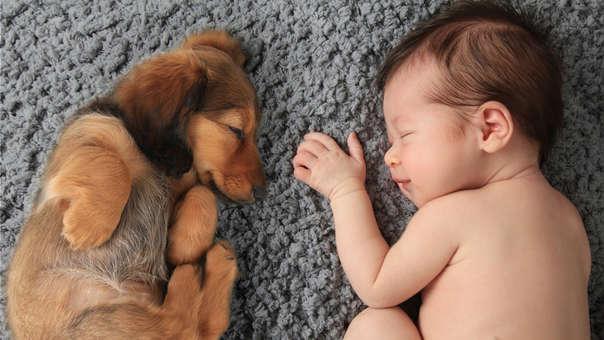 Corre a abrazar a tu mejor amigo: este jueves se celebra el Día Mundial de los Animales