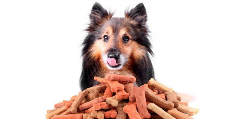 Aprende a preparar Premios para perros